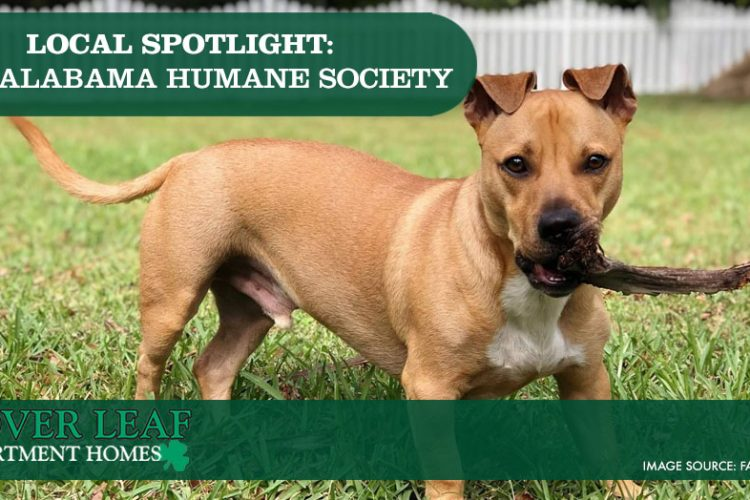 Local Spotlight: East Alabama Humane Society