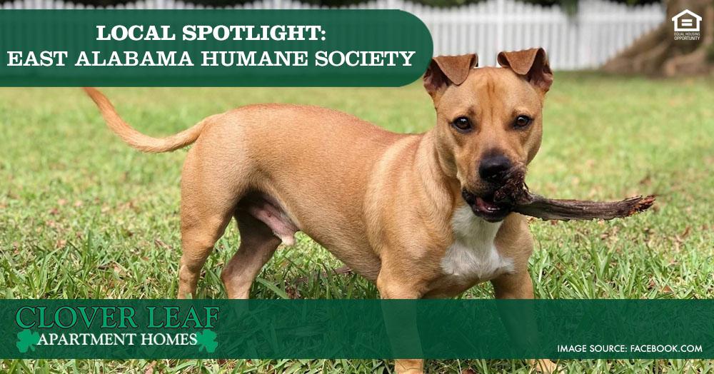 Local Spotlight: East Alabama Humane Society